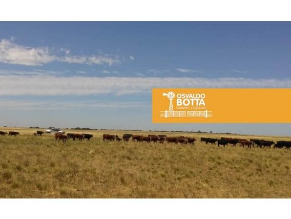 100 Hectáreas En Ataliva Roca, La Pampa