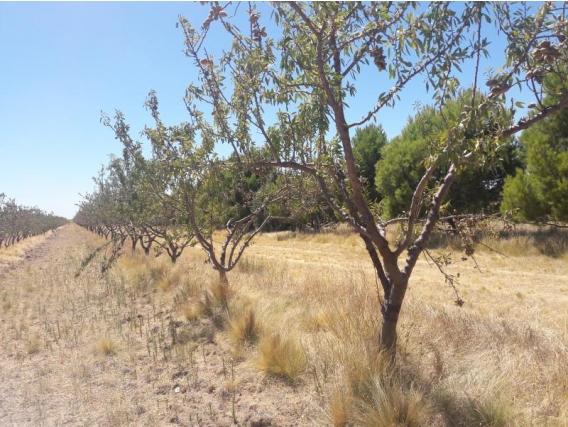 130 Ha Bahía Blanca Agrícola Con Olivos Y Lanares