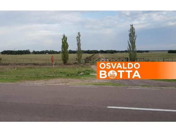 1350 Has En Winifreda, La Pampa