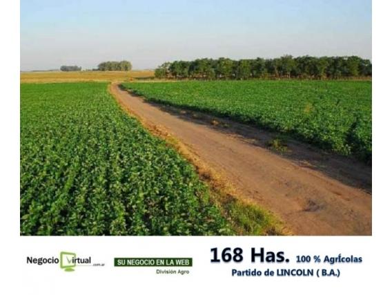 168 Has. En Partido De Lincoln, Ideal Para Agricultura