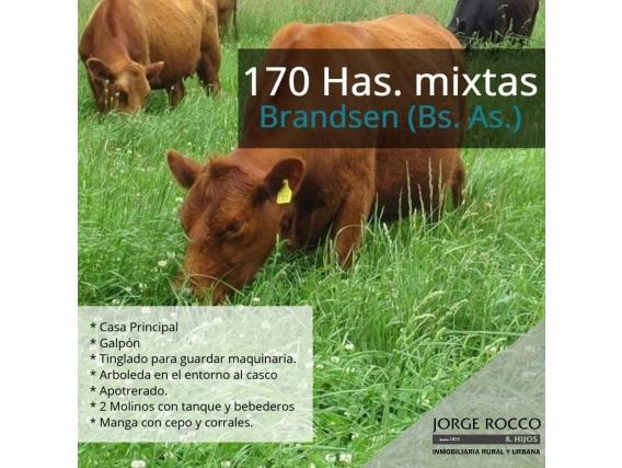 170 Has En Brandsen, Campo Mixto.