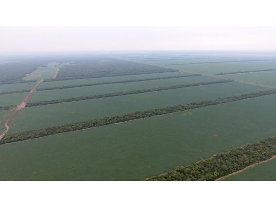 2.000 Has En Árbol Blanco, Sgo. Del Estero - Agrícola