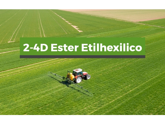 Herbicida 2,4 D Ester Etilico
