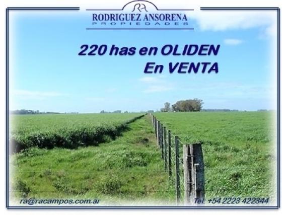 220 Has En Oliden Campo Mixto