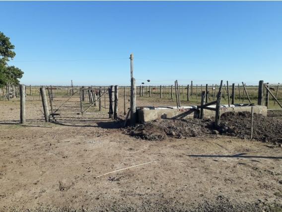 Campo de 220 has en La Pelada, Santa Fe.