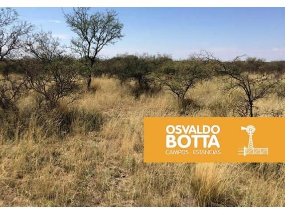 2700 Hectáreas En Toay, La Pampa