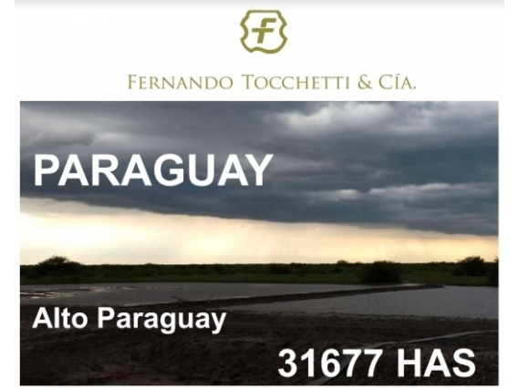 Campo De 31677 Hás Venta Depto. Alto Paraguay-Paraguay.
