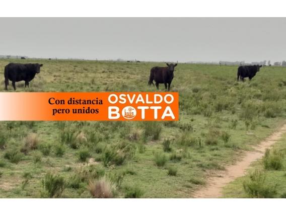450 Hectáreas En General San Martín, La Pampa