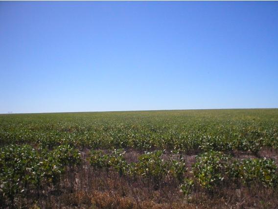 50 Has Agrícolas Concepción Del Uruguay Us 5.700/ha