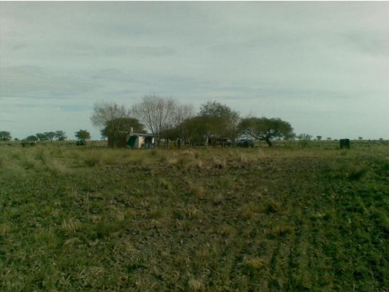 710 Has. Mixtas En Huanqueros, Santa Fe.