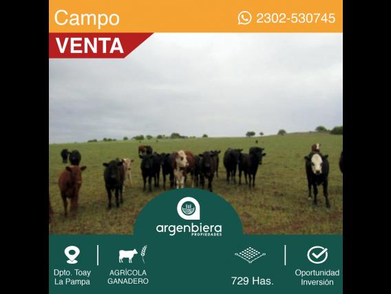 729 Has - Dpto. Toay - La Pampa
