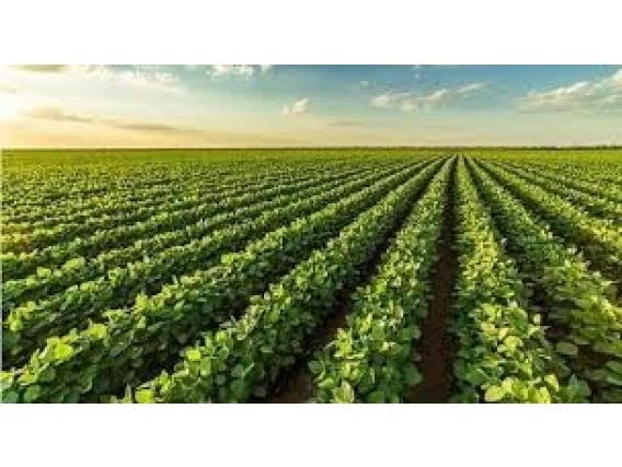 80 Ha Agricolas Excepcionales Sobre Ruta