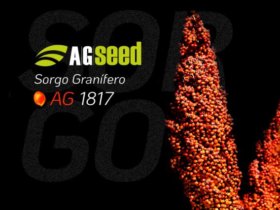 Sorgo AG 1817