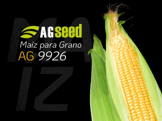 Maiz AG 9926