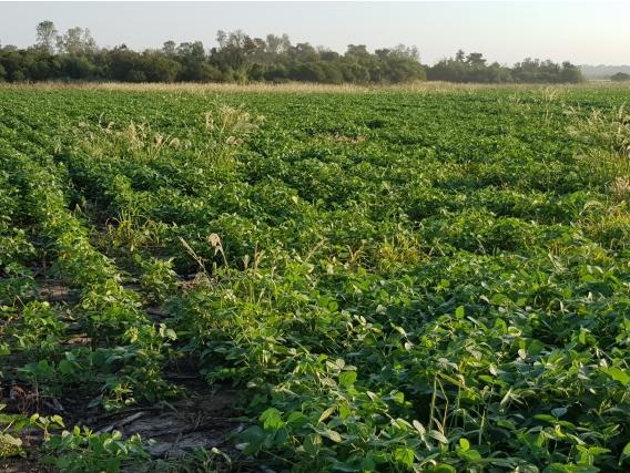 89 Hectareas Agricolas En Venta En Tres Isletas Chaco