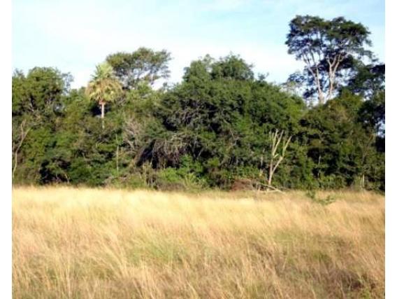 Campo 500 Hectáreas Chaco