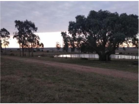 Campo De 237 Has Venta Depto. Lavalleja Uruguay