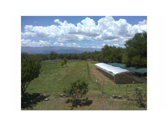 Campo De 33 Hectareas En Cerrito Blanco- San Luis