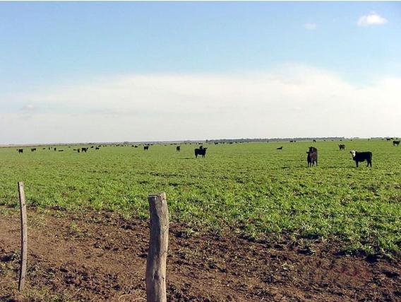 Campo en Lavalleja 1039 Has