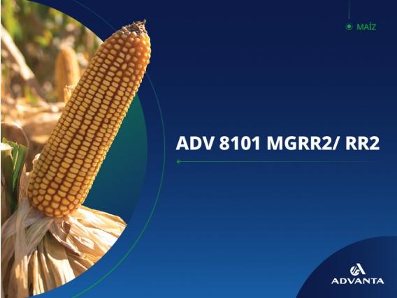 Maíz ADV 8101 RoundUp Ready 2 (RR2) - Advanta