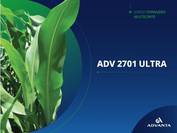 Sorgo ADV 2701 ULTRA
