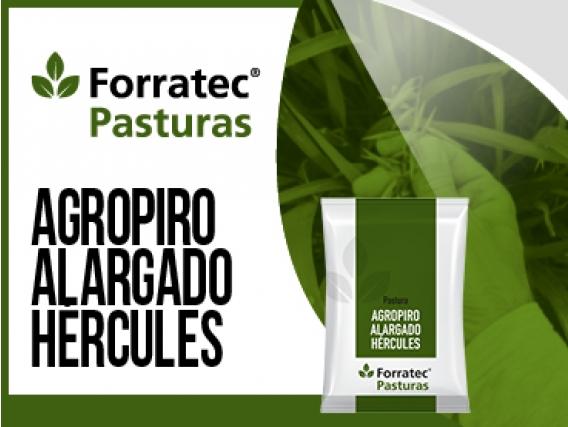 Pastura Agropiro Hércules