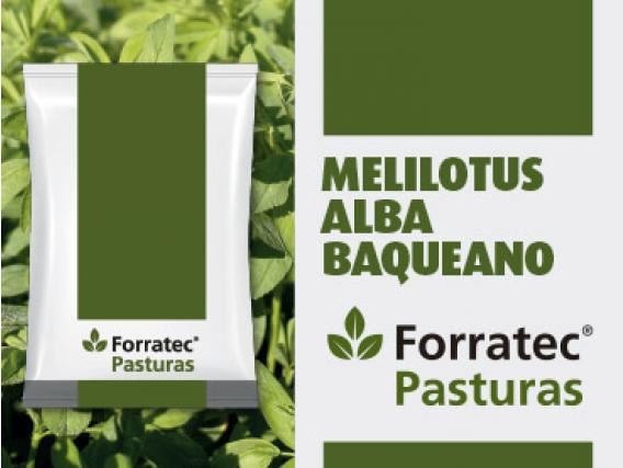 Pastura Melilotus Alba Baqueano