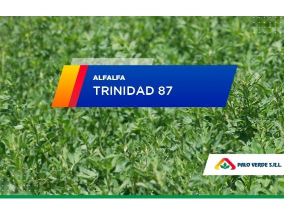 Alfalfa Trinidad 87