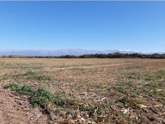 Alquilo campo de 60 has en Zárate Norte, Tucumán.