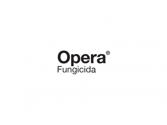 Fungicida Opera Epoxiconazole + Piraclostrobin - BASF