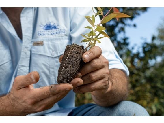 Asesoramiento Forestal Y Silvopastoril