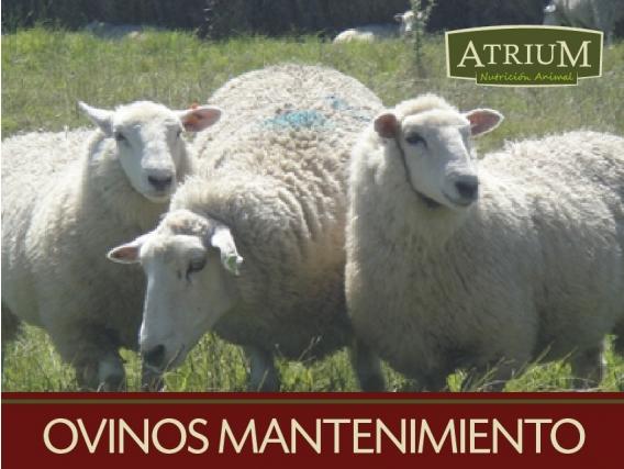 Alimento balanceado ovinos mantenimiento