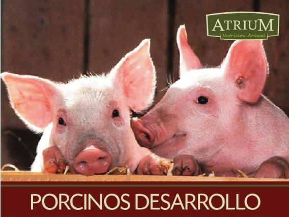 Alimento balanceado porcinos desarrollo
