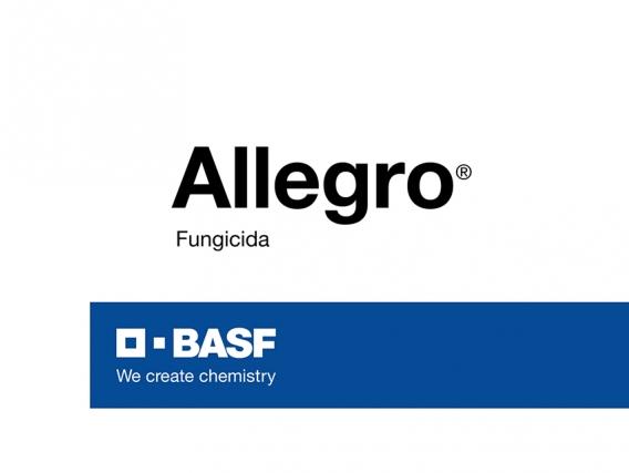 Fungicida Allegro Epoxiconazole+kresoxim-metil - BASF