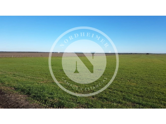 Bovril, Entre Ríos 1.569 Ha, Campo Agrícola Con Mejoras