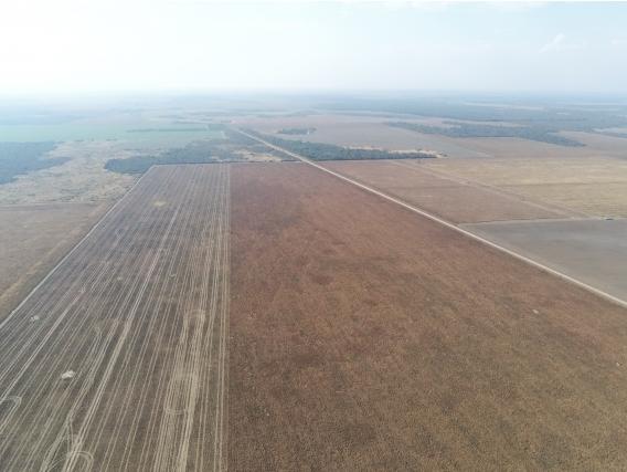 Campo Agrícola De 5000 has En Chaco Para Alquilar