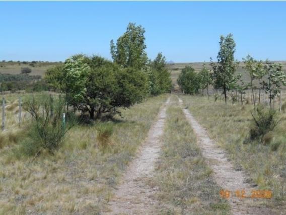 Campo En San Luis de 41 Has Sobre Ruta
