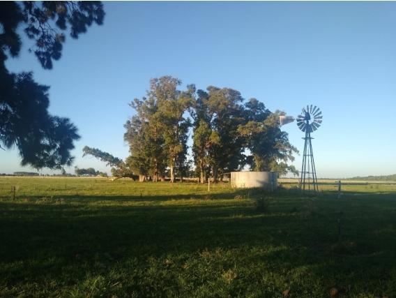 Campo 111 Has. A Solo 3500 M Del Asfalto. Brandsen