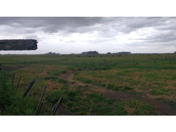 Campo 370 Ha Ganadero En Saladillo