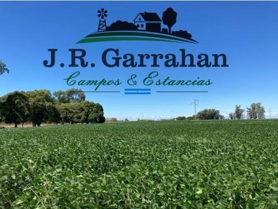 Campo 43,5 Ha. Agrícola - Paraje La Campana