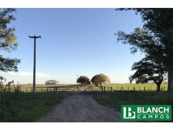 Campo Venta - Agrícola Ganadero - 390 Hectáreas - Salto