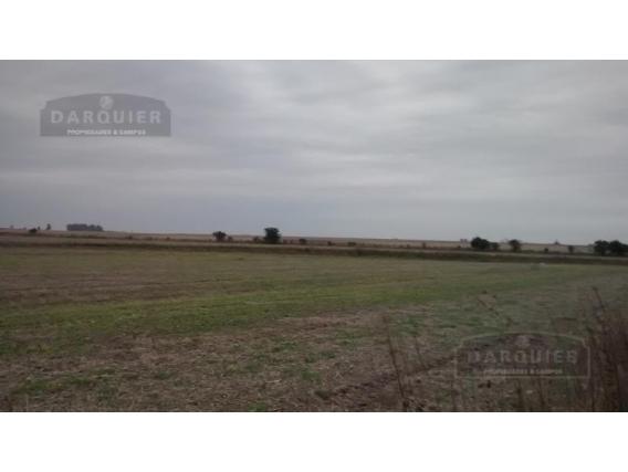 Campo Agricola En Venta - 75 Ha - Basavilbaso