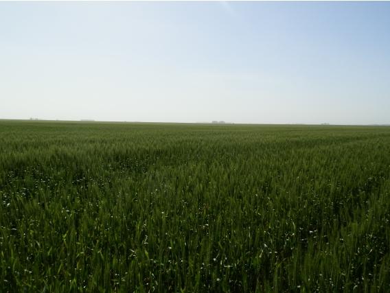Campo Agricola Sobre Ruta