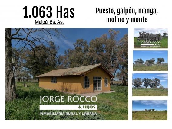 Campo De 1.063 Has En Maipú - Buenos Aires