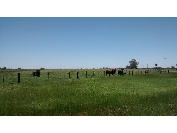 Campo en Villa Angela, Chaco - Por hectárea