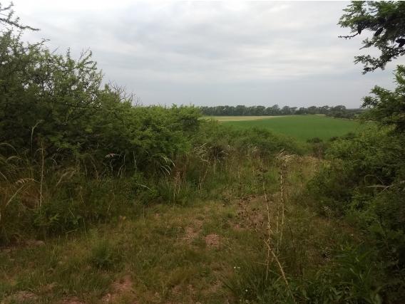 Campo De Sierras En Venta En El Manzano-Prov De Córdoba