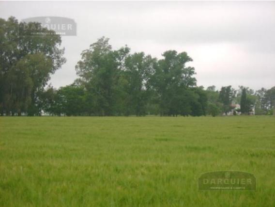 Campo En Venta. 25 De Mayo. Bs. Aires. Agricola