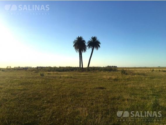 Campo En Venta 590 Ha - Chacabuco , Buenos Aires