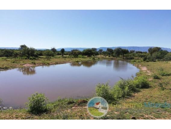Campo En Venta - 64 Hect - Palihuante - San Luis