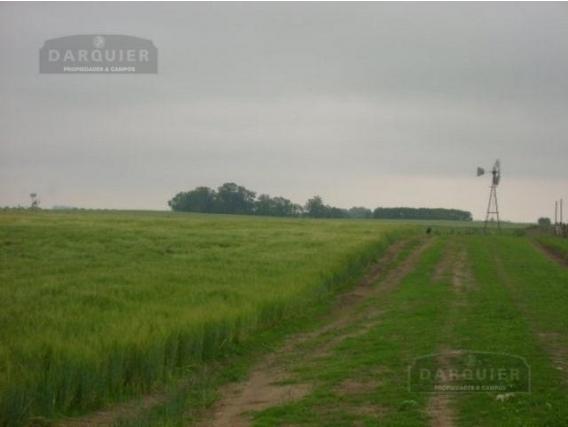 Campo En Venta - 800 Ha - 25 De Mayo